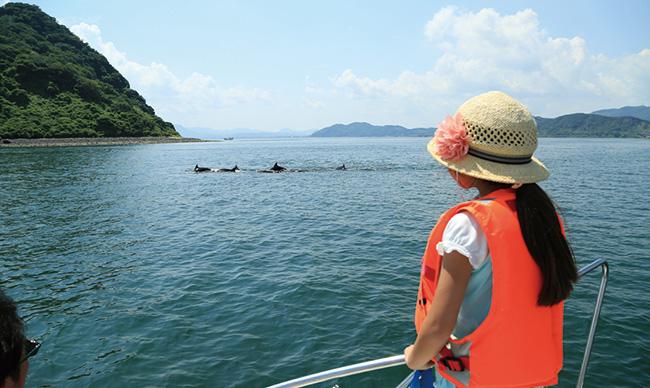 錦江湾のイルカ